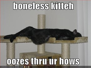 boneless kitteh