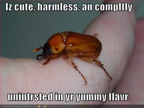 Iz cute, harmless, an compltly  unintrsted in yr yummy flavr.