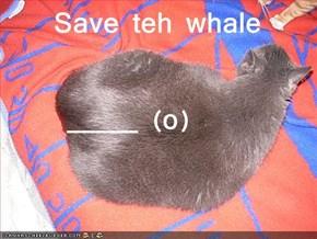 Save teh whale          _____ (o)