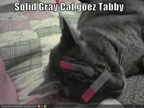 Solid Gray Cat goez Tabby