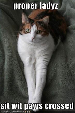 proper ladyz  sit wit paws crossed