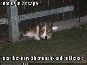 i not tryin 2 scape....  i jus chekin wether on dis side of fense