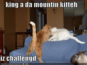 king a da mountin kitteh  iz challengd