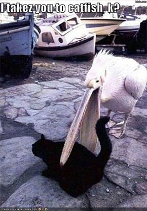 I takez you to catfish, k?