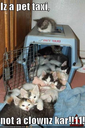Iz a pet taxi,  not a clownz kar!!11!!