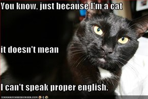 You know, just because I'm a cat it doesn't mean I can't speak proper english.