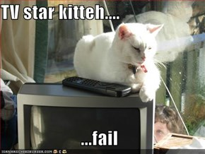 TV star kitteh....  ...fail