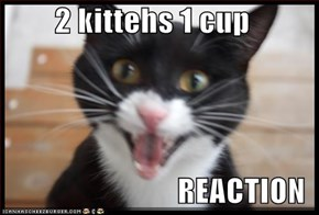 2 kittehs 1 cup  REACTION