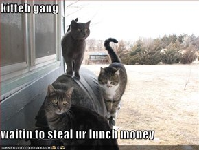 kitteh gang  waitin to steal ur lunch money