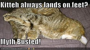 Kitteh always lands on feet?  Myth Busted!