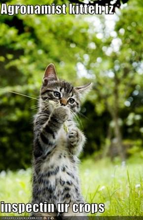 Agronamist kitteh iz  inspectin ur crops