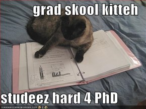 grad skool kitteh  studeez hard 4 PhD