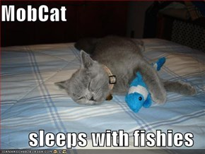 MobCat  sleeps with fishies
