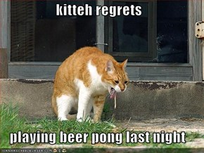 kitteh regrets  playing beer pong last night
