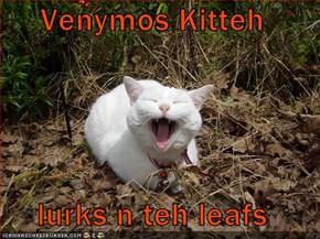 Venymos Kitteh  lurks n teh leafs