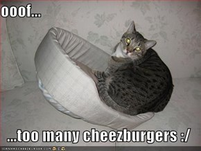 ooof...  ...too many cheezburgers :/