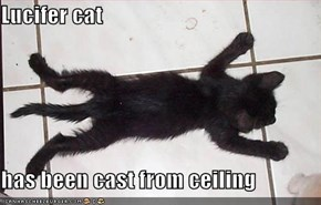 Lucifer cat  has been cast from ceiling