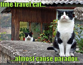 time travel cat...  ...almost cause paradox.