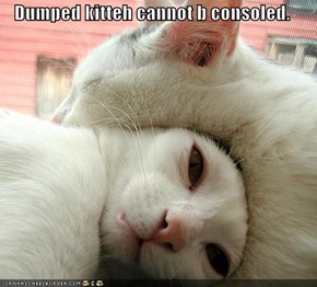 Dumped kitteh cannot b consoled.