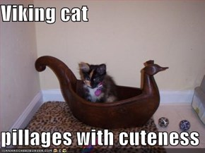 Viking cat  pillages with cuteness