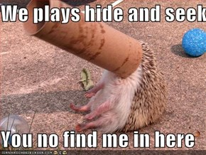 We plays hide and seek  You no find me in here