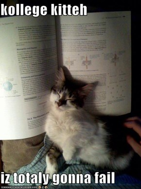kollege kitteh   iz totaly gonna fail