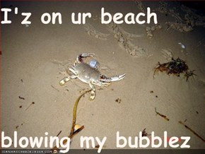 I'z on ur beach  blowing my bubblez