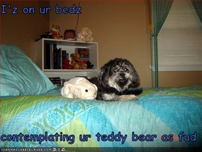 I'z on ur bedz  contemplating ur teddy bear as fud