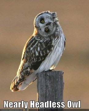 Nearly Headless Owl