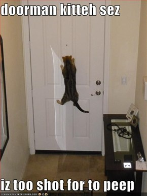 doorman kitteh sez  iz too shot for to peep