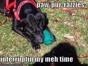 paw-pur-razzies  interruptin my meh time