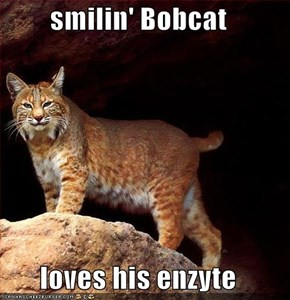 smilin' Bobcat  loves his enzyte