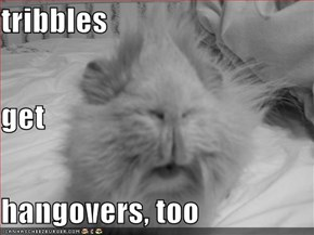 tribbles get  hangovers, too