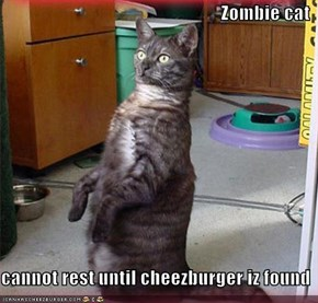 Zombie cat  cannot rest until cheezburger iz found