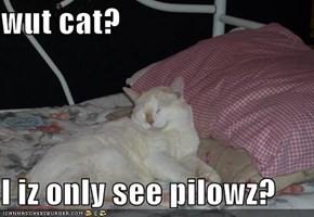wut cat?  I iz only see pilowz?