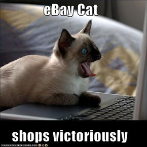eBay Cat  shops victoriously
