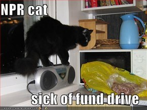 NPR cat  sick of fund drive