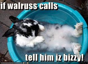 if walruss calls  tell him iz bizzy!