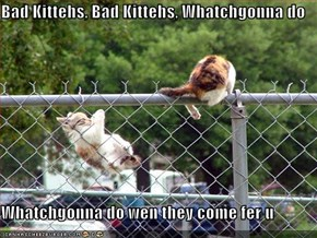 Bad Kittehs, Bad Kittehs, Whatchgonna do  Whatchgonna do wen they come fer u