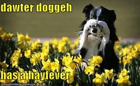 dawter doggeh  has a hayfever