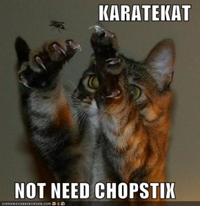 KARATEKAT  NOT NEED CHOPSTIX