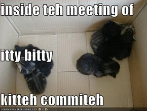 inside teh meeting of  itty bitty kitteh commiteh