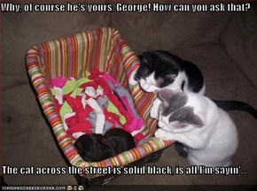 Why, of course he's yours, George! How can you ask that?  The cat across the street is solid black, is all I'm sayin'...