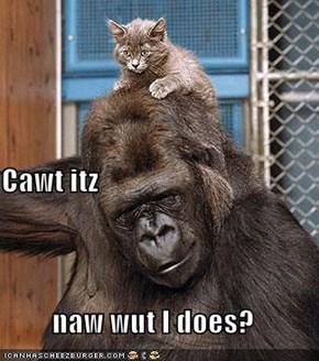 Cawt itz naw wut I does?