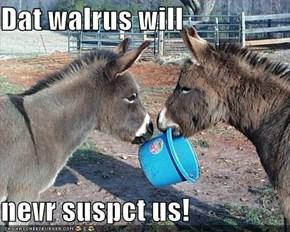 Dat walrus will   nevr suspct us!