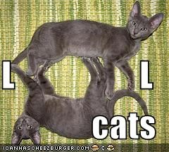 L                  L cats