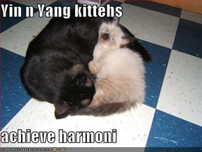 Yin n Yang kittehs   achieve harmoni