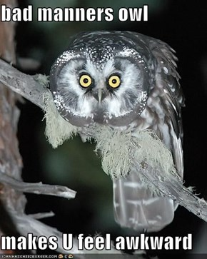 bad manners owl  makes U feel awkward