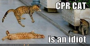 CPR CAT  is an idiot