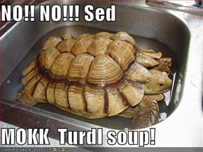 NO!! NO!!! Sed   MOKK  Turdl soup!
